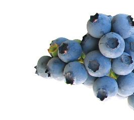 Blueberries-Duke