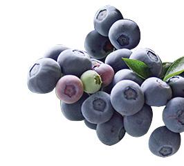 Blueberries-Legacy
