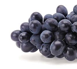 Grape-Autum