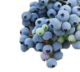 Blueberries-Cargo